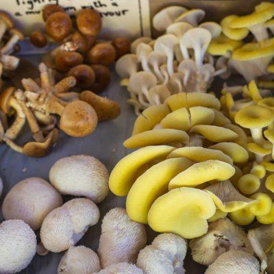 Cygnet Mushroom Farm gourmet box