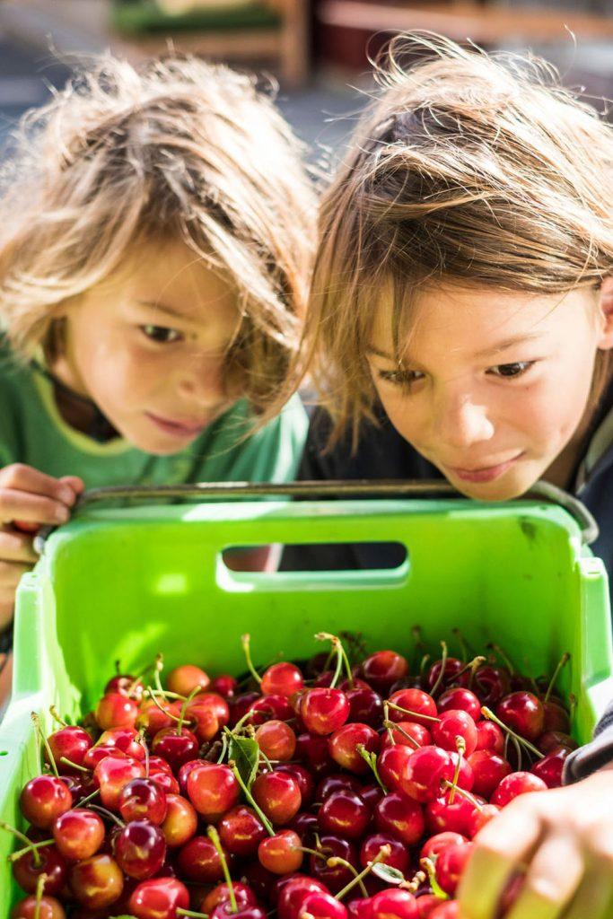 farmgate-market-children-cherries