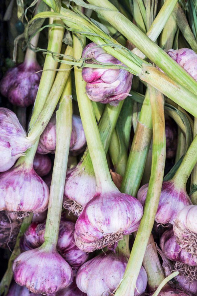 farmgate-market-garlic
